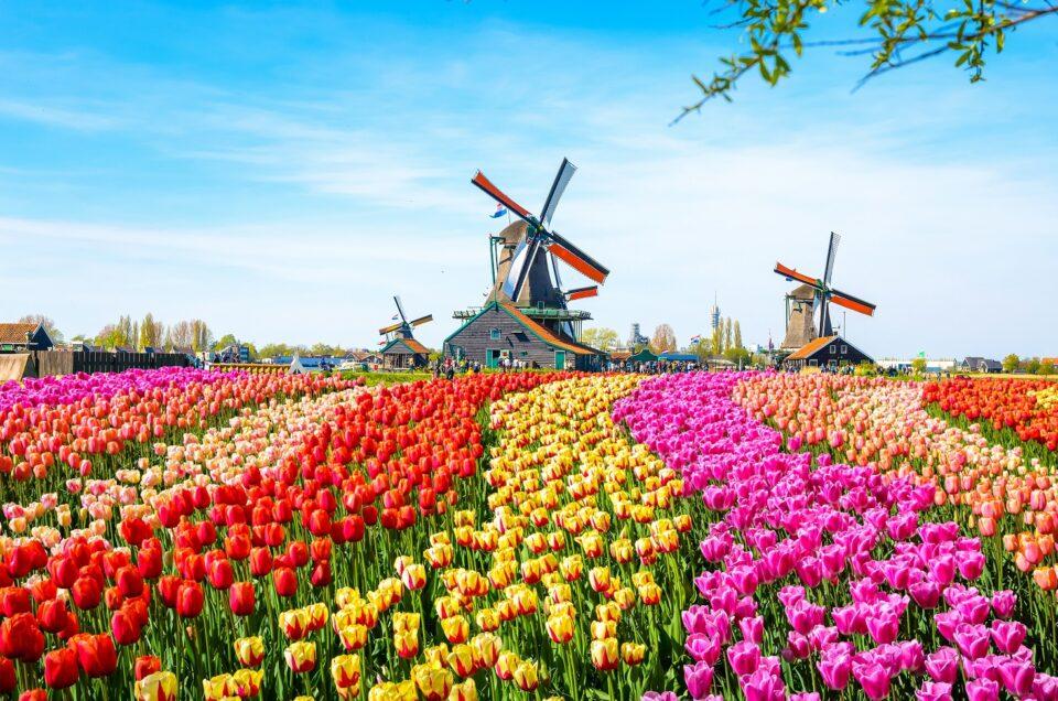sukcesja w Holandii